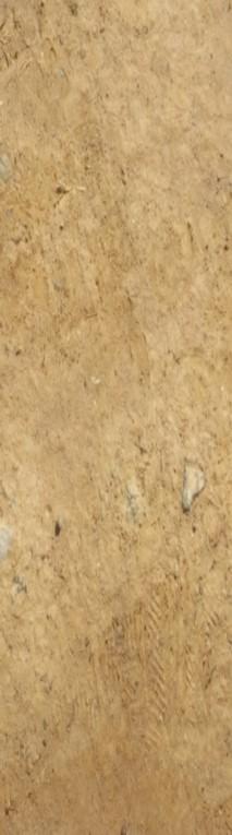 Dry Dirt Texture